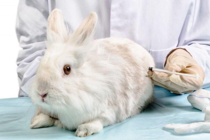 Вакцинация крольчат
