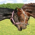 Больные лошади