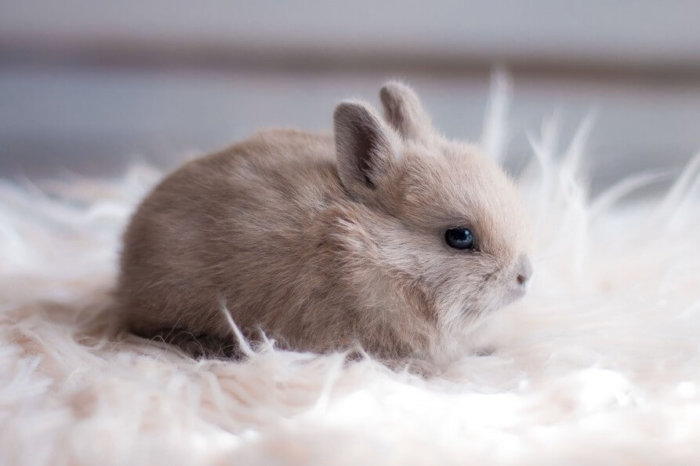 Трусишка: Имя можно выбрать по поведению кролика