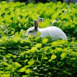 Кролик в сорняках