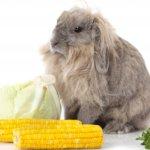 Натуральный корм для кролика
