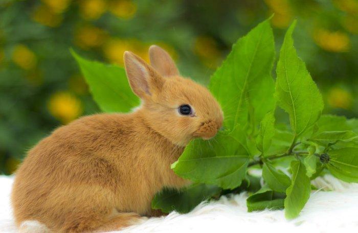 Кролик ест веточный корм