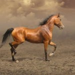 Внешность татарской лошади