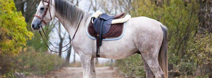 Терская лошадь