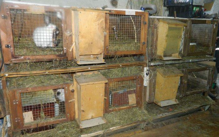 Антисанитария в крольчатнике