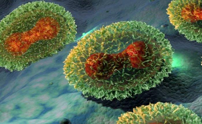 ДНК-содержащий поксвирус