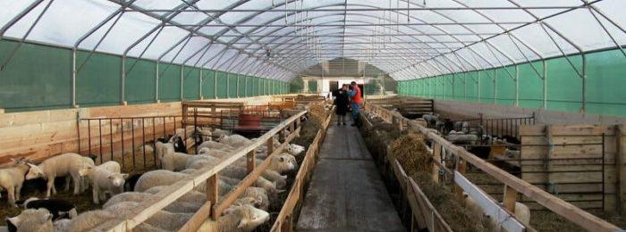Кошары и овчарни представлены в двух разновидностях