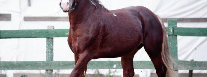 Лошадь на выгульной площадке