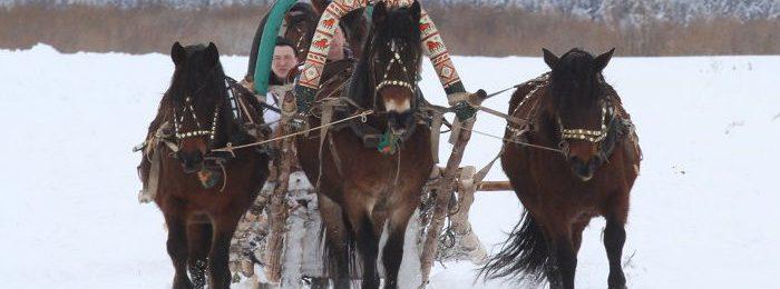 У мезенских лошадей крепкий иммунитет