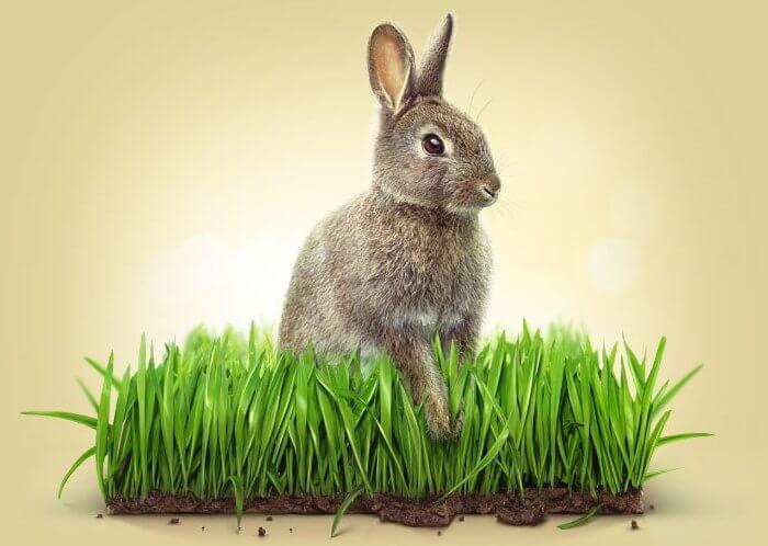 Кролик на мех