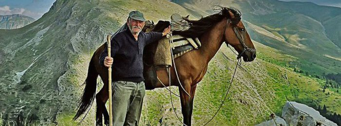 Порода лошадей пиндос
