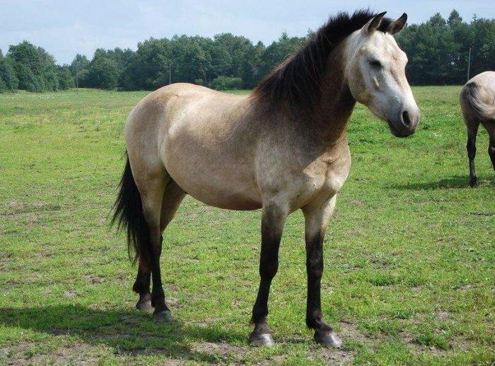 Окрас у лошадей преимущественно гнедой и серый