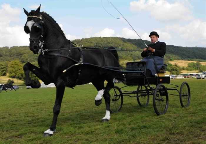Лошади хакнэ
