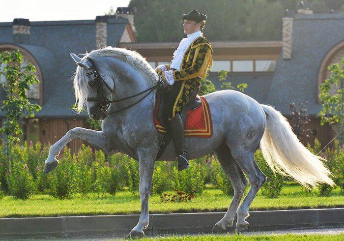 Лошади постоянно принимают участие в конкурсах