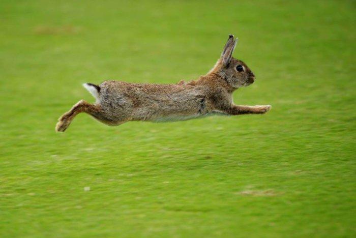 Внешние отличия между зайцем и кроликом