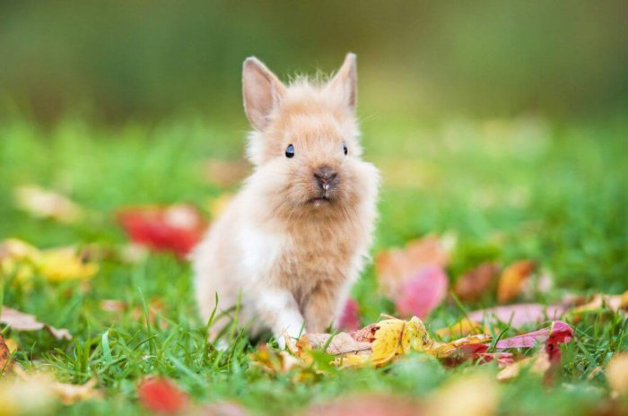 Охота у крольчихи