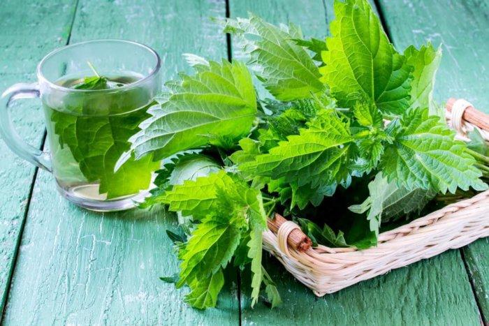 Кроликов можно кормить стеблями и листьями крапивы