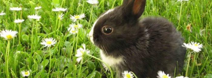 Крольчонок на траве