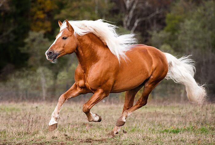 Конкурс лошадей