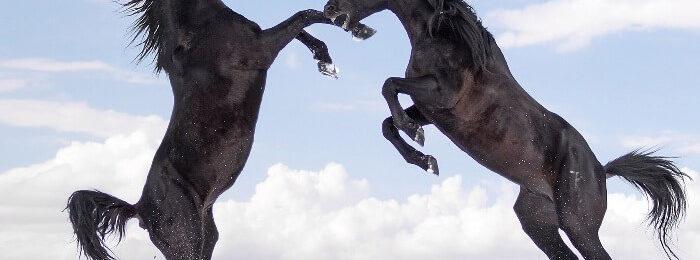 Кабардинские лошади