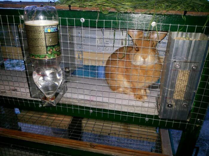Самодельная поилка для кролика