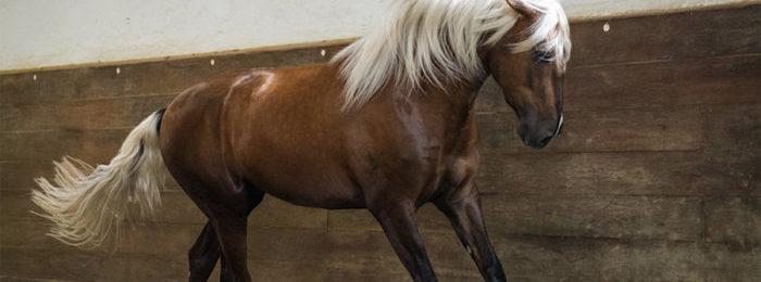 Конь лузитано