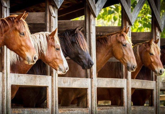 Кони в конюшне