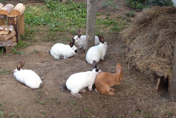 Вольерное содержание кроликов