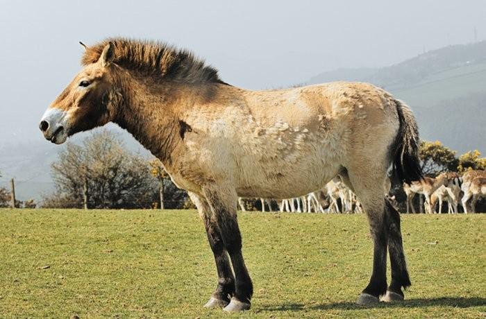 Лошади соррайя