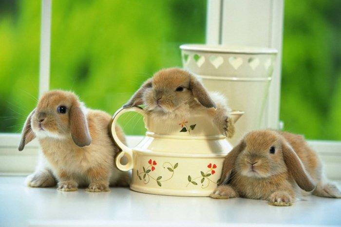 Крольчата и питание