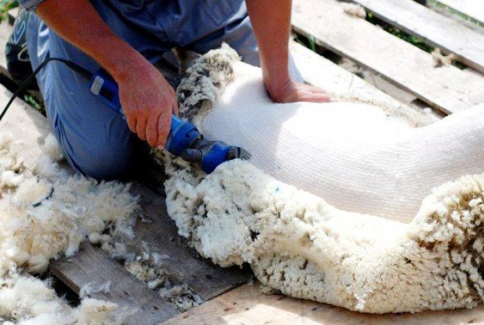 Ручная или механическая машинка для стрижки овец