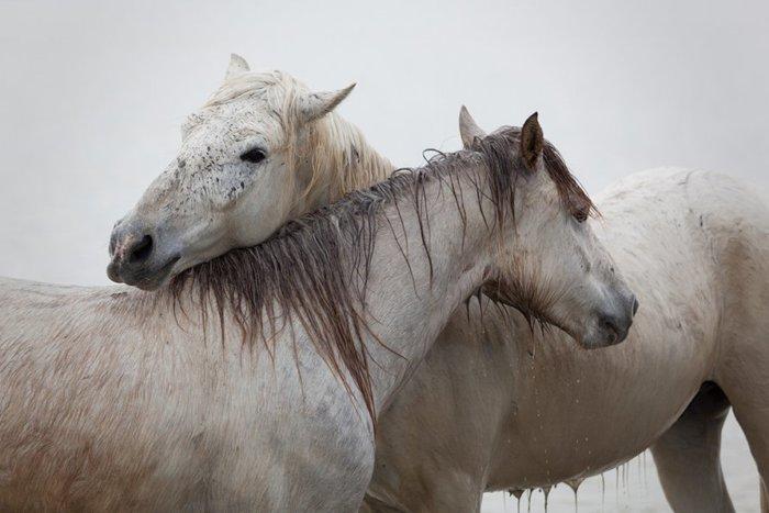 Лошади Кабаргу
