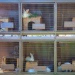 Двухъярусная клетка для кроликов