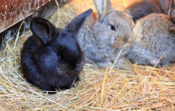 Выход крольчат из маточника