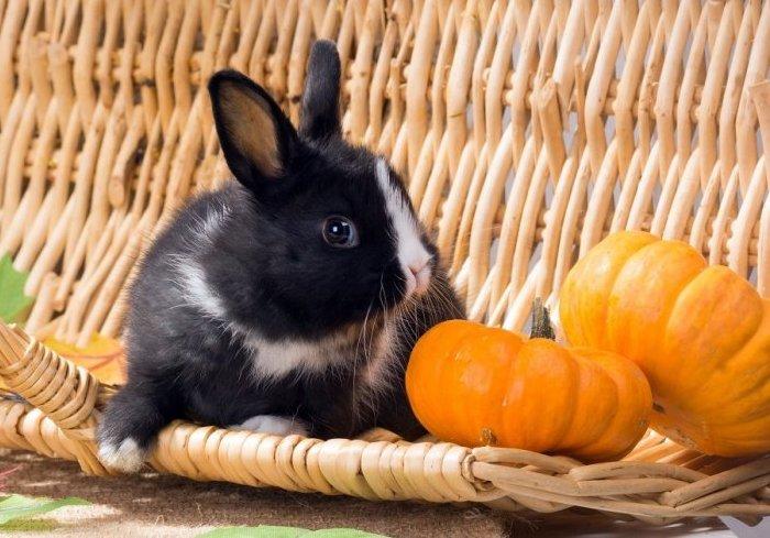 Свежие овощи в рационе крольчат