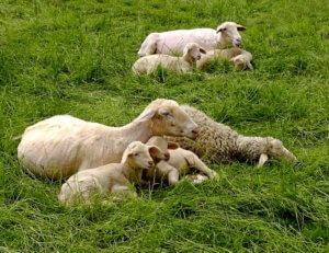 Свежая трава для молодняка