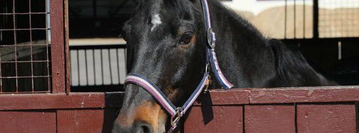Туберкулез у лошадей