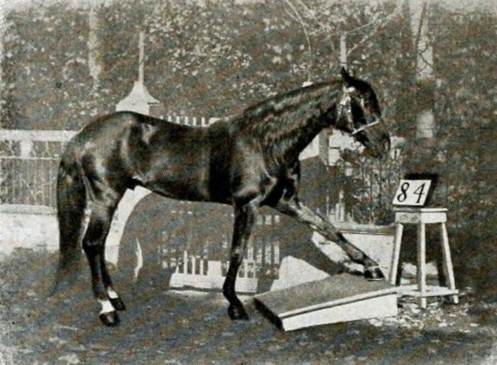 Лошадь Ганс