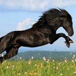 Карачаевский конь