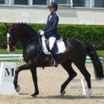 Голштинская порода лошадей в конном спорте