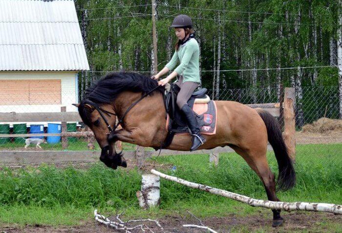 Вятская лошадь в конном спорте