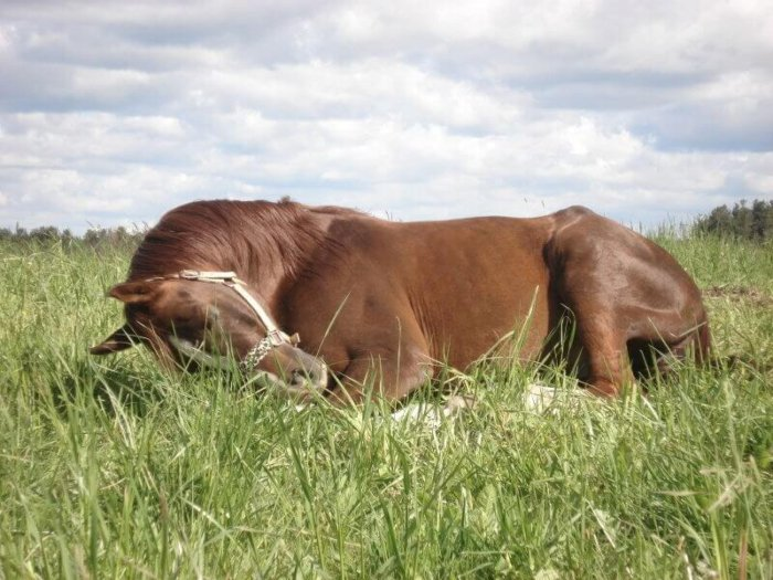 Спящая лошадь
