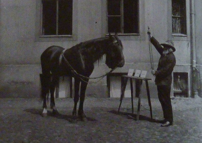 Умный конь