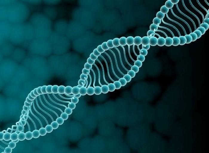 Гены лошадей