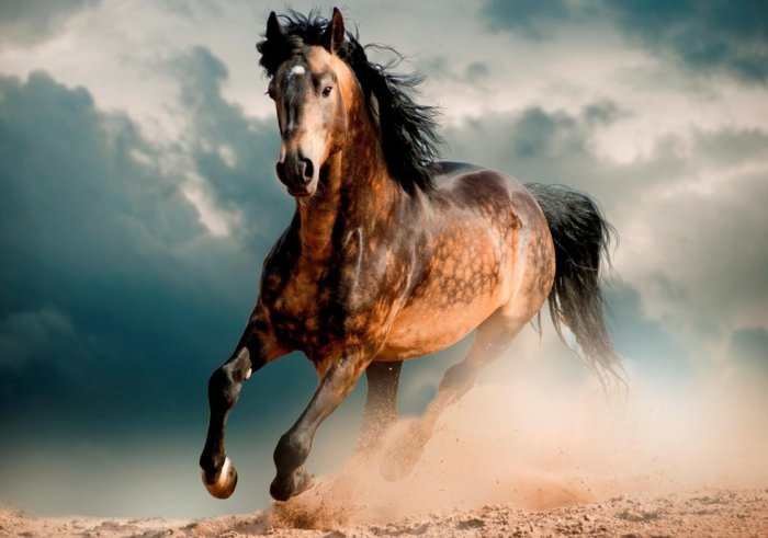 Порода лошадей мустанг