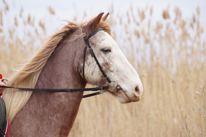 Темпераментная лошадь