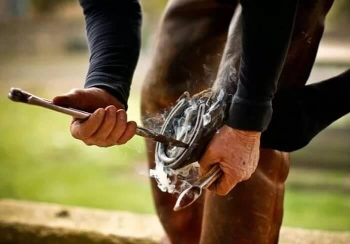 Подковывают лошадь