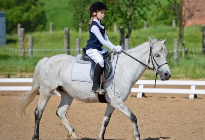 Хождение на лошади шагом