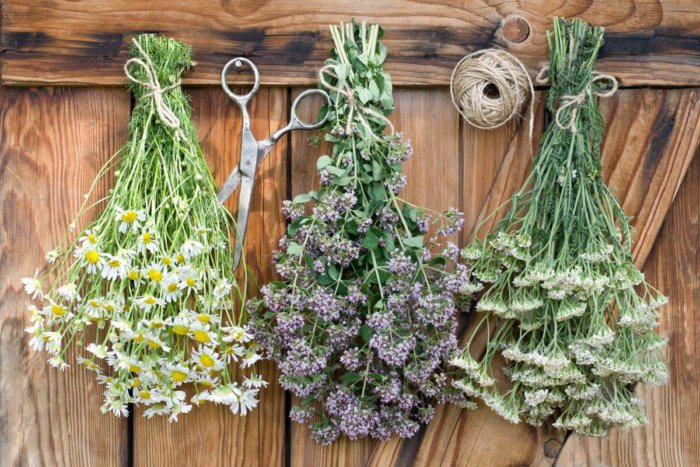 Как сушат лечебные травы для кроликов