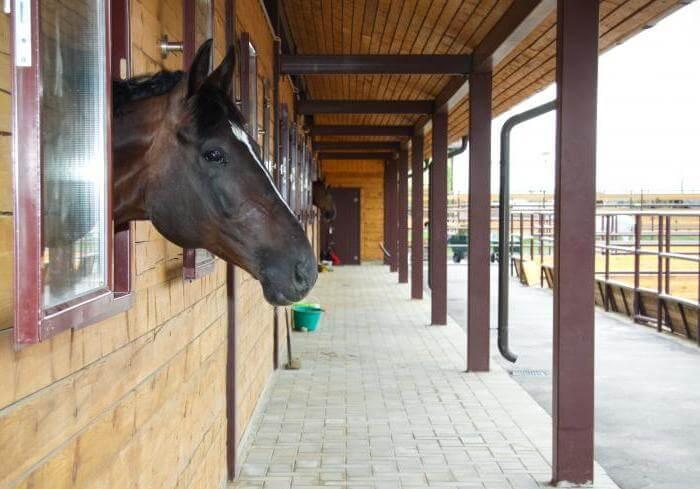 Больная лошадь